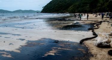 Troppi delfini morti nel Golfo del Messico, colpa della marea nera Bp del 2010