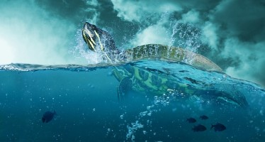 Five years after Bp oil spill, Gulf habitat resilient