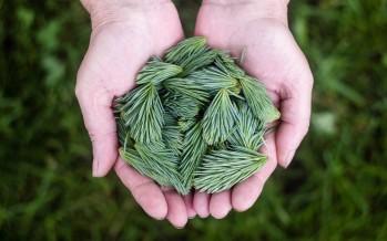 Salvare l'ambiente con un po' di gentilezza