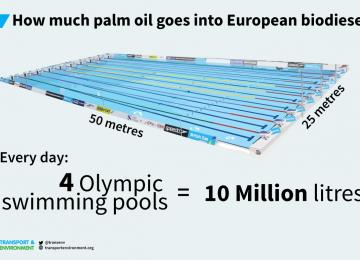 Where-palm-oil-goes-pool_1