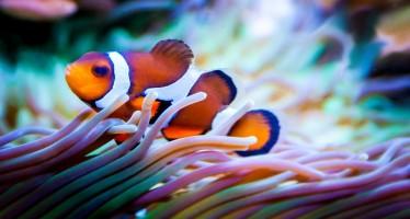Le barriere coralline minacciate dai combustibili fossili