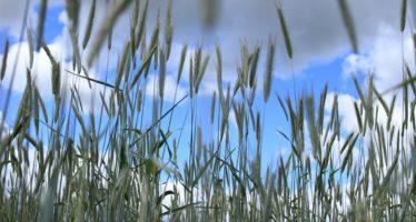 """G7 agricoltura, """"500 milioni di persone fuori dalla fame entro il 2030″"""