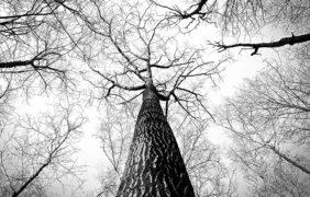 La strategia europea sulle energie rinnovabili potrebbe danneggiare le foreste e il clima: l'avvertimento degli scienziati